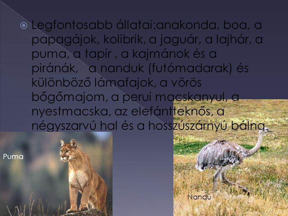  Legfontosabb állatai:anakonda, boa, a papagájok, kolibrik, a jaguár, a lajhár, a puma, a tapír, a kajmánok és a piránák, a nanduk (futómadarak) és k