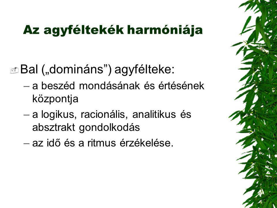 """Az agyféltekék harmóniája  Bal (""""domináns"""") agyfélteke: –a beszéd mondásának és értésének központja –a logikus, racionális, analitikus és absztrakt g"""