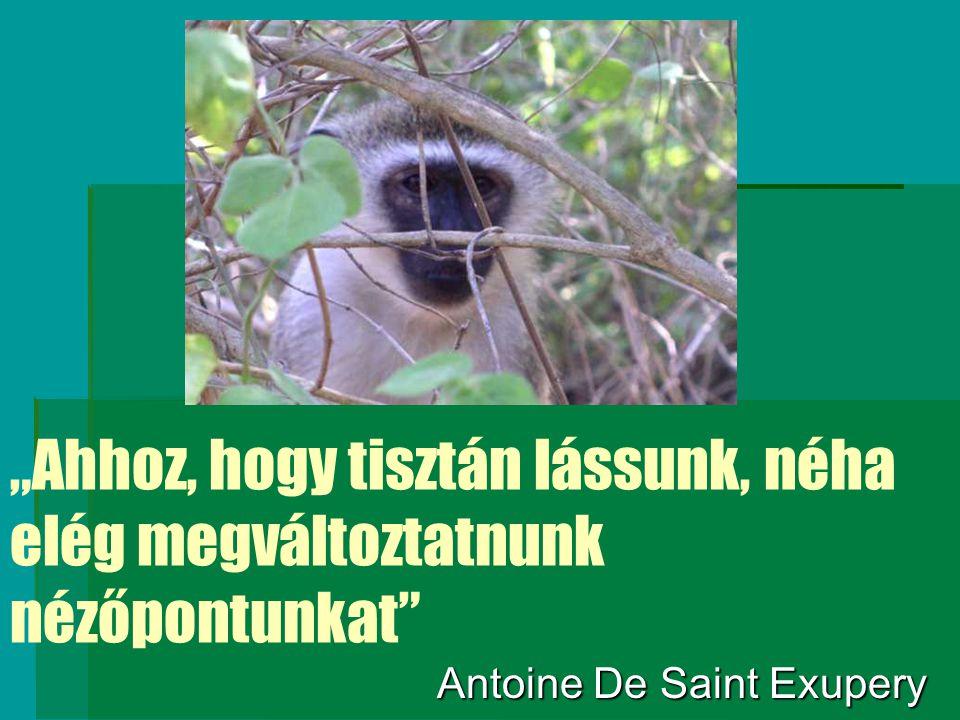 """""""Ahhoz, hogy tisztán lássunk, néha elég megváltoztatnunk nézőpontunkat"""" Antoine De Saint Exupery"""