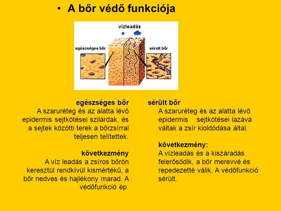 •A bőr védő funkciója egészséges bőr A szaruréteg és az alatta lévő epidermis sejtkötései szilárdak, és a sejtek közötti terek a bőrzsírral teljesen t