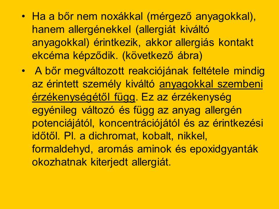 •Ha a bőr nem noxákkal (mérgező anyagokkal), hanem allergénekkel (allergiát kiváltó anyagokkal) érintkezik, akkor allergiás kontakt ekcéma képződik. (