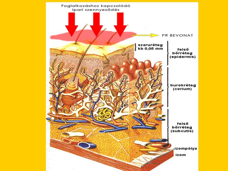 •A bőr a különböző érzékelősejteken keresztül érez.