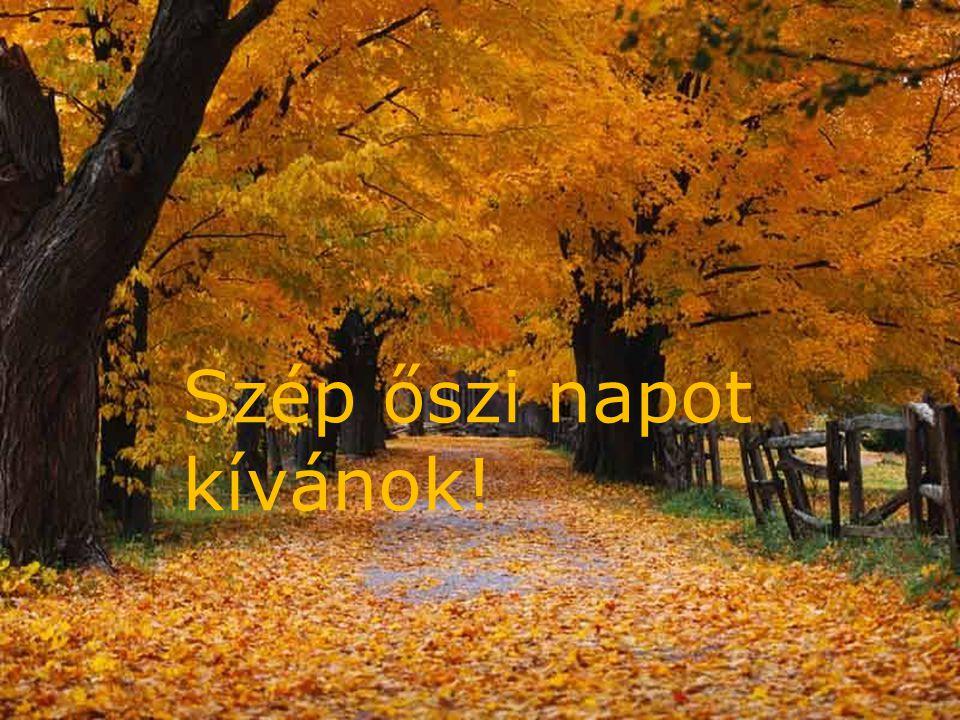 2010. 10. 14. Szép őszi napot kívánok!