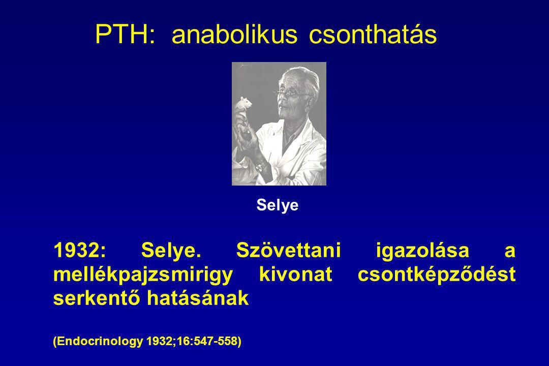 PTH: anabolikus csonthatás 1932: Selye.