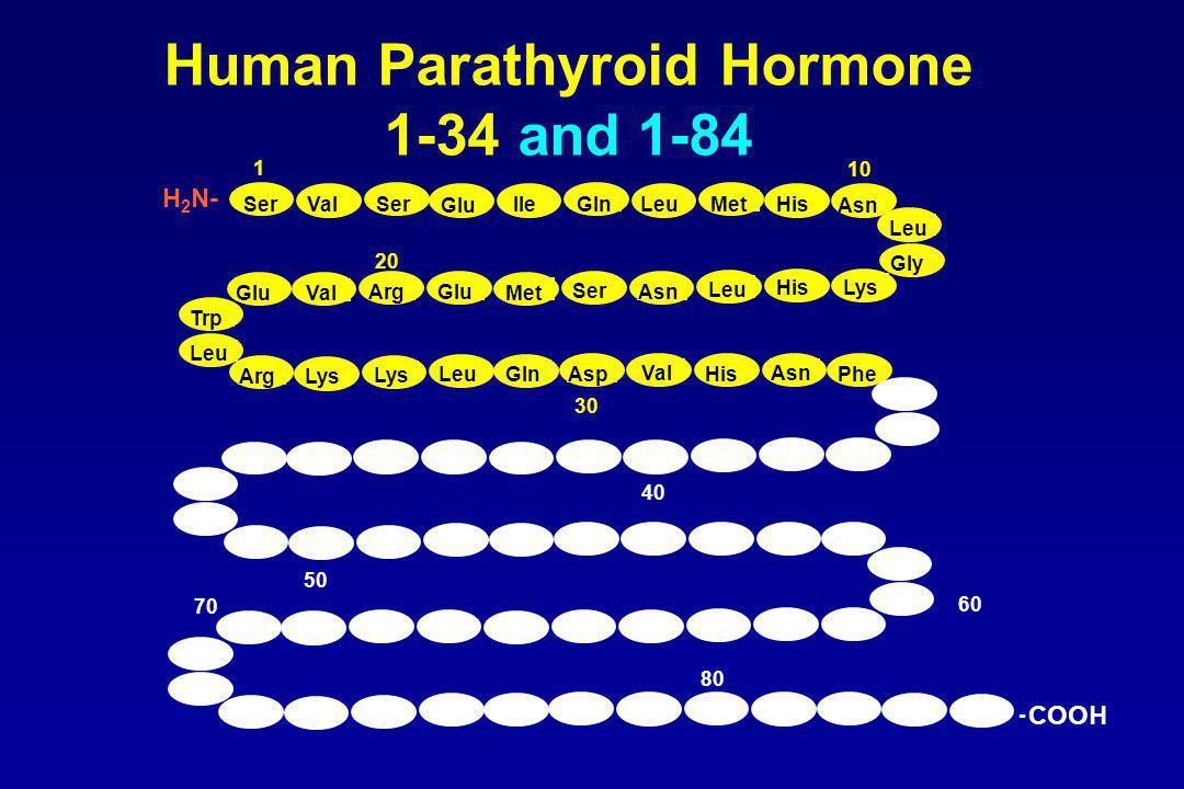 Human Parathyroid Hormone 1-34 and 1-84 1 10 20 30 SerValSer Glu IleGlnLeuMetHis Asn Leu Gly Lys His Leu Asn Ser Met GluArg Val Glu Trp Leu ArgLys LeuGlnAsp Val His Asn Phe 50 40 60 70 80 - COOH H 2 N-
