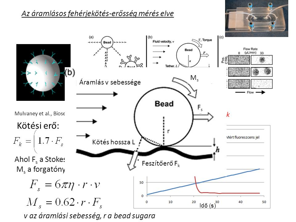 Fluoreszcencia-mérésen alapuló fehérjekötés-erősség mérő berendezés Érzékelő Fényforrás Fénykábel Gerjesztés Fluoreszcencia Lemosó folyadék Motoros adagoló Állvány mozgatóval Minta víz lemosódik Állítható sebesség
