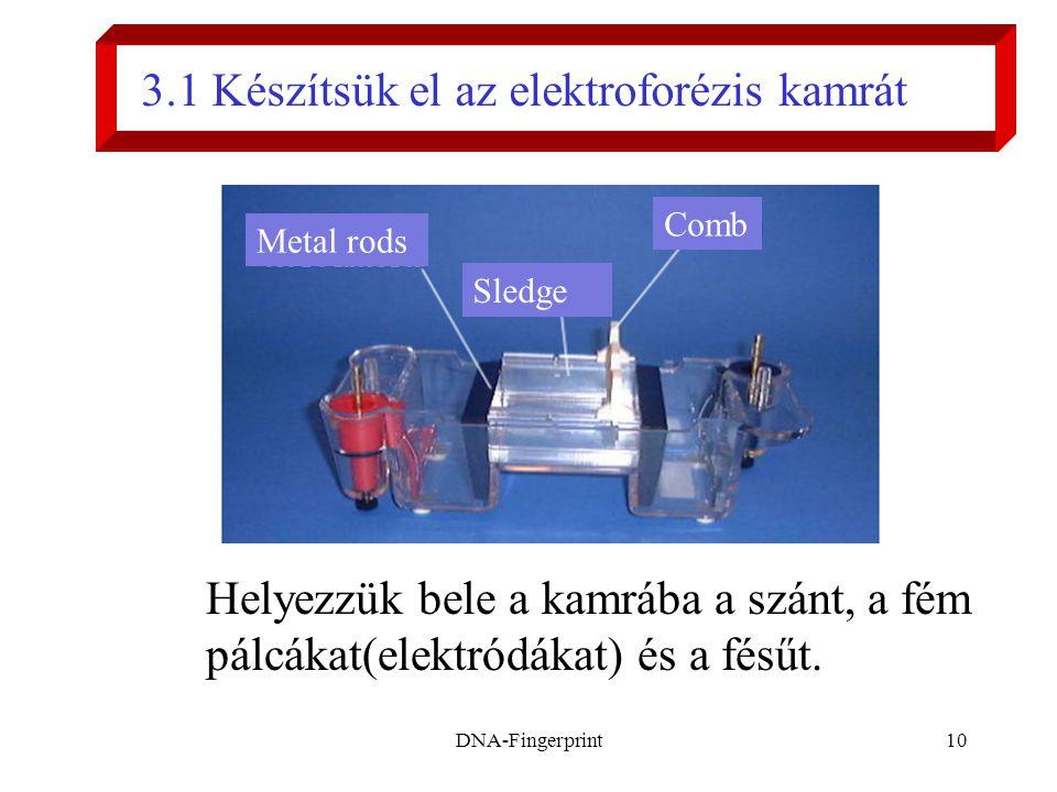 DNA-Fingerprint10 Helyezzük bele a kamrába a szánt, a fém pálcákat(elektródákat) és a fésűt. 3.1 Készítsük el az elektroforézis kamrát Metal rods Sled