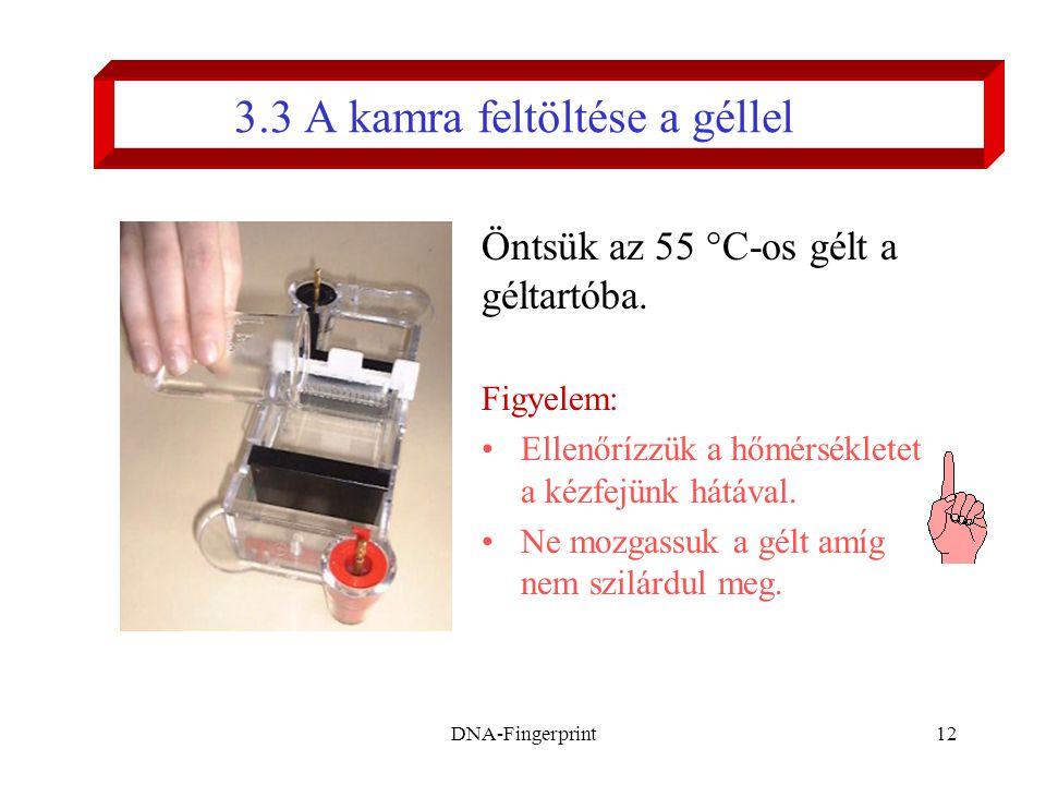 DNA-Fingerprint12 3.3 A kamra feltöltése a géllel Öntsük az 55 °C-os gélt a géltartóba. Figyelem: •Ellenőrízzük a hőmérsékletet a kézfejünk hátával. •