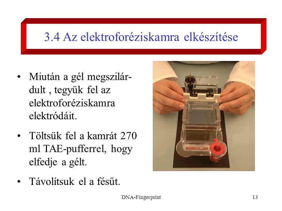 DNA-Fingerprint13 3.4 Az elektroforéziskamra elkészítése •Miután a gél megszilár- dult, tegyük fel az elektroforéziskamra elektródáit. •Töltsük fel a