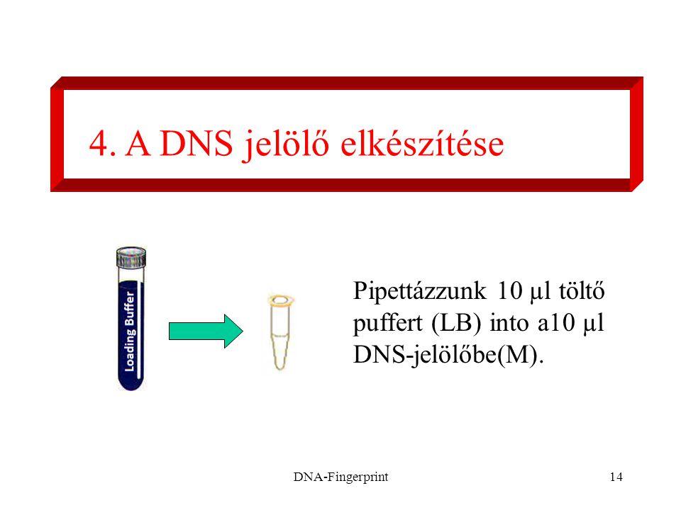 DNA-Fingerprint14 4. A DNS jelölő elkészítése Pipettázzunk 10 µl töltő puffert (LB) into a10 µl DNS-jelölőbe(M).