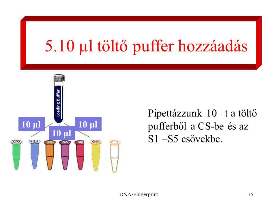 DNA-Fingerprint15 5.10 µl töltő puffer hozzáadás Pipettázzunk 10 –t a töltő pufferből a CS-be és az S1 –S5 csövekbe. 10 µl