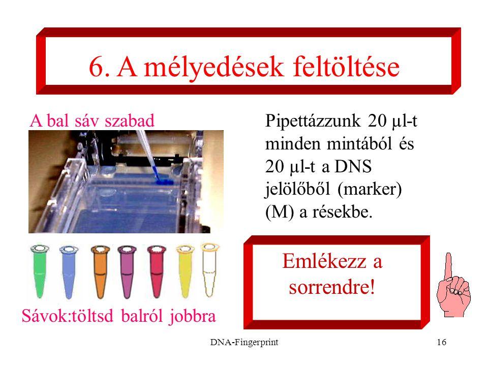 DNA-Fingerprint16 Pipettázzunk 20 µl-t minden mintából és 20 µl-t a DNS jelölőből (marker) (M) a résekbe. 6. A mélyedések feltöltése Emlékezz a sorren