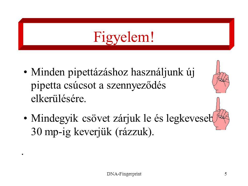 DNA-Fingerprint16 Pipettázzunk 20 µl-t minden mintából és 20 µl-t a DNS jelölőből (marker) (M) a résekbe.