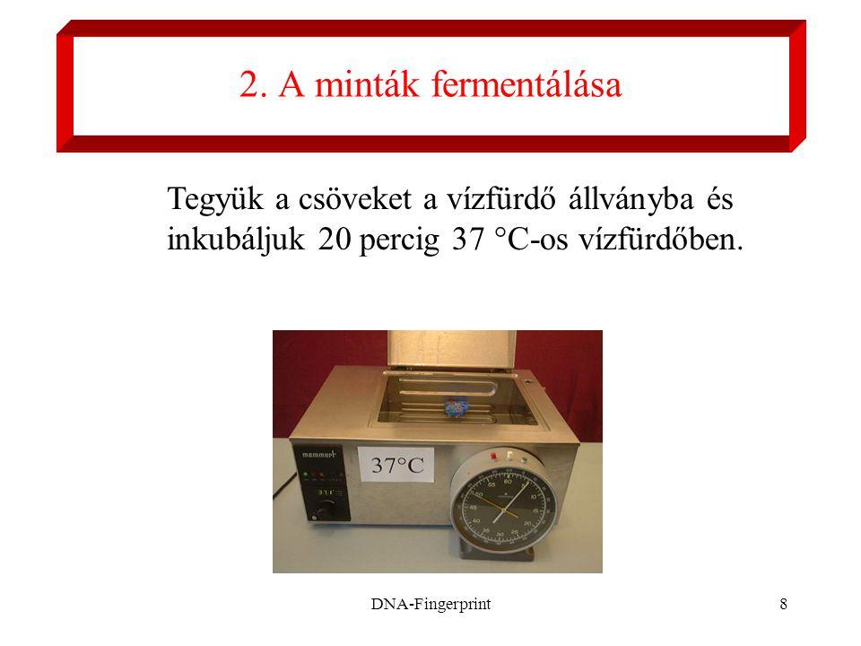 DNA-Fingerprint8 2. A minták fermentálása Tegyük a csöveket a vízfürdő állványba és inkubáljuk 20 percig 37 °C-os vízfürdőben.
