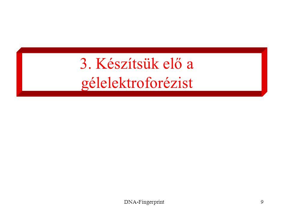 DNA-Fingerprint9 3. Készítsük elő a gélelektroforézist