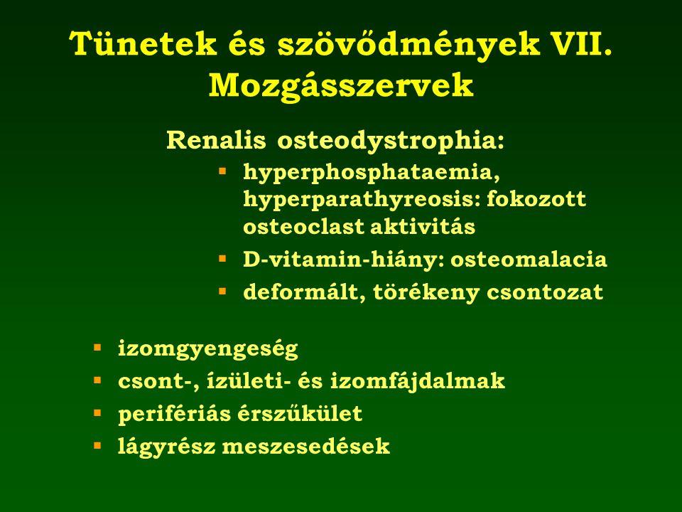 Tünetek és szövődmények VII. Mozgásszervek  izomgyengeség  csont-, ízületi- és izomfájdalmak  perifériás érszűkület  lágyrész meszesedések  hyper