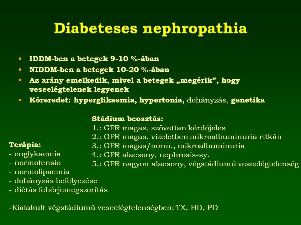"""Diabeteses nephropathia  IDDM-ben a betegek 9-10 %-ában  NIDDM-ben a betegek 10-20 %-ában  Az arány emelkedik, mivel a betegek """"megérik"""", hogy vese"""