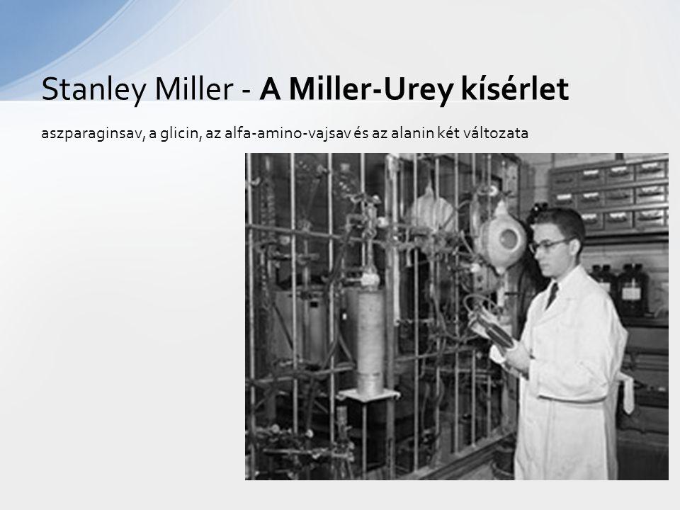aszparaginsav, a glicin, az alfa-amino-vajsav és az alanin két változata Stanley Miller - A Miller-Urey kísérlet