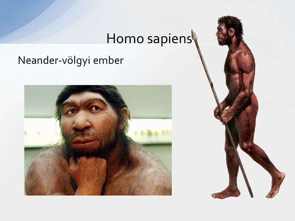 Neander-völgyi ember Homo sapiens