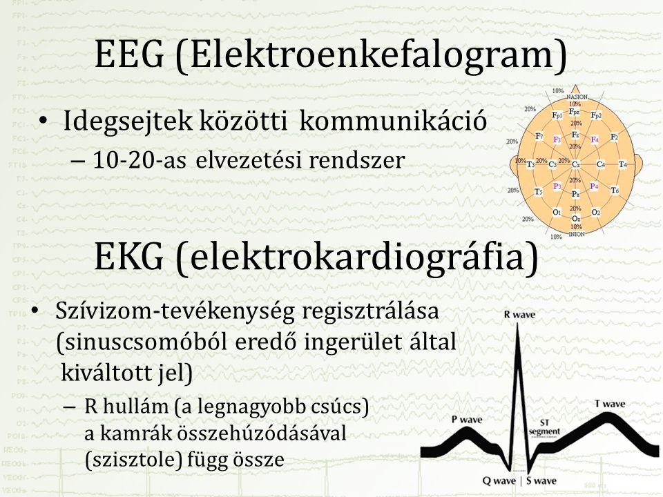 EEG (Elektroenkefalogram) • Idegsejtek közötti kommunikáció – 10-20-as elvezetési rendszer EKG (elektrokardiográfia) • Szívizom-tevékenység regisztrál