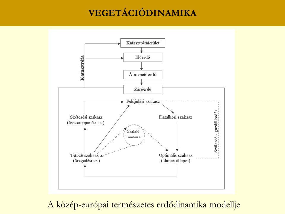 VEGETÁCIÓDINAMIKA A közép-európai természetes erdődinamika modellje