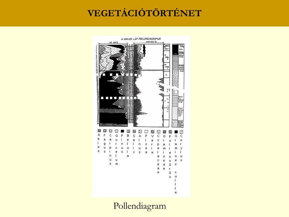 VEGETÁCIÓTÖRTÉNET Pollendiagram