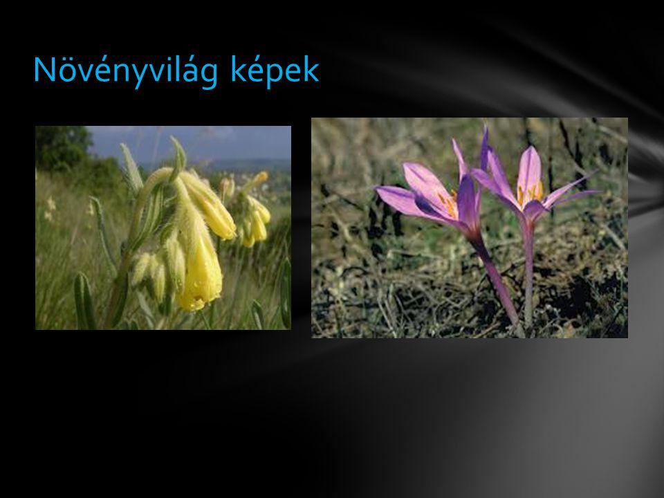 Növényvilág képek