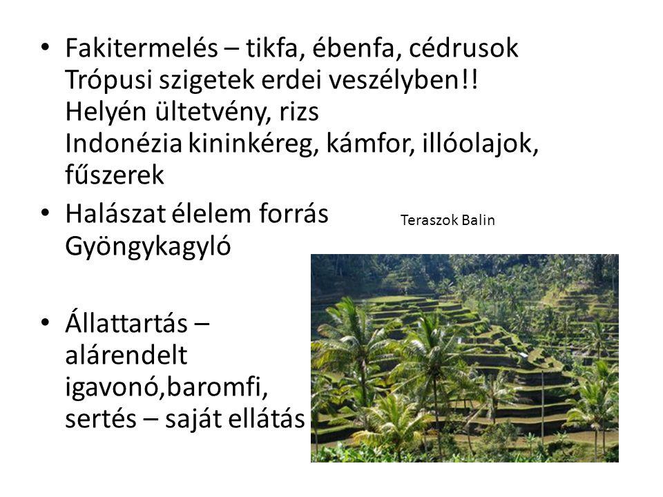 • Fakitermelés – tikfa, ébenfa, cédrusok Trópusi szigetek erdei veszélyben!.