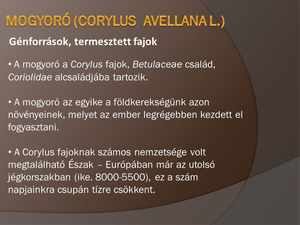 Génforrások, termesztett fajok • A mogyoró a Corylus fajok, Betulaceae család, Coriolidae alcsaládjába tartozik. • A mogyoró az egyike a földkerekségü