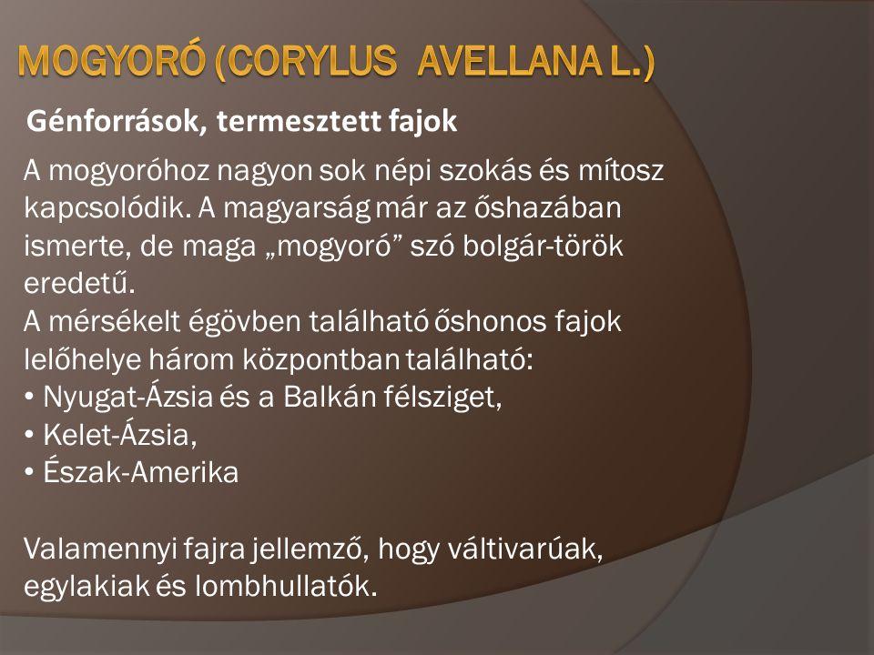 Génforrások, termesztett fajok Corylus avellana –közönséges (erdei vagy európai) mogyoró.