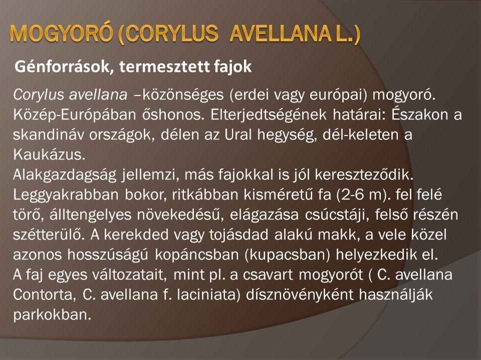 Génforrások, termesztett fajok Corylus avellana –közönséges (erdei vagy európai) mogyoró. Közép-Európában őshonos. Elterjedtségének határai: Északon a