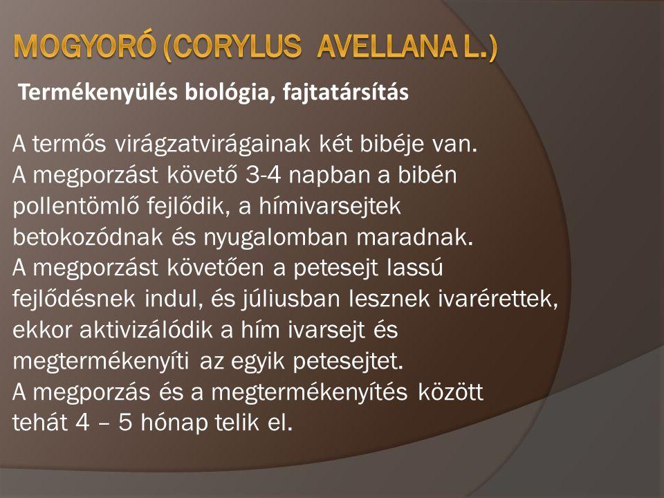Termékenyülés biológia, fajtatársítás A termős virágzatvirágainak két bibéje van. A megporzást követő 3-4 napban a bibén pollentömlő fejlődik, a hímiv