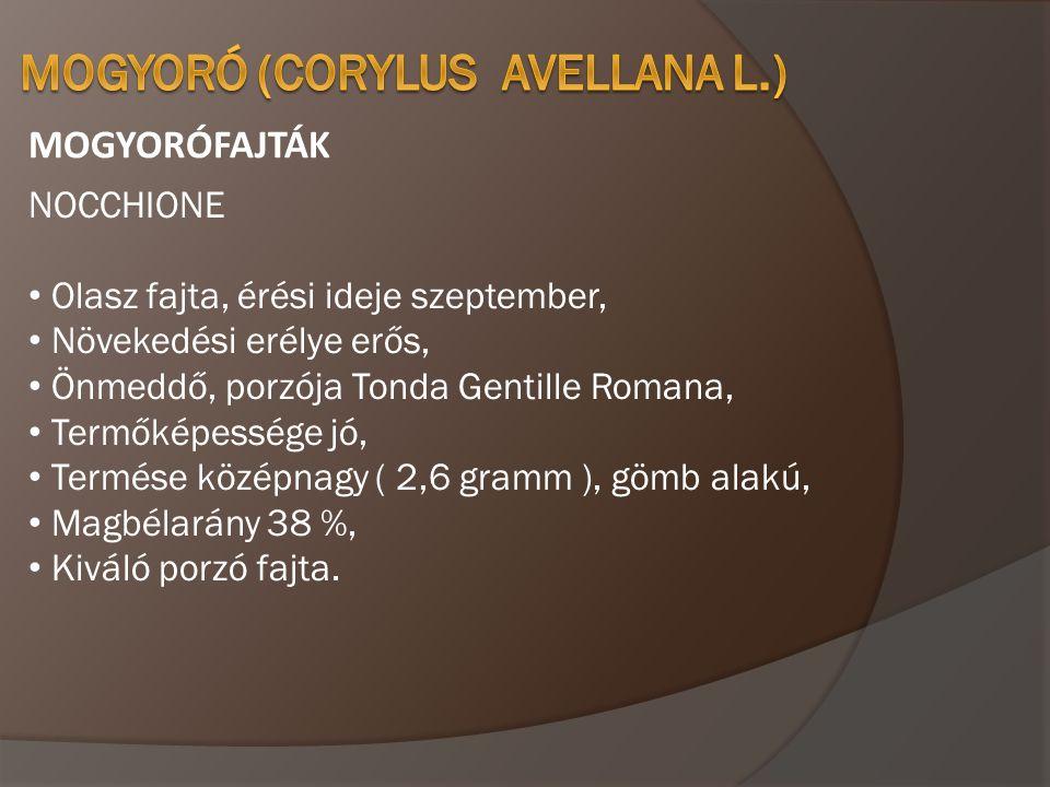 MOGYORÓFAJTÁK NOCCHIONE • Olasz fajta, érési ideje szeptember, • Növekedési erélye erős, • Önmeddő, porzója Tonda Gentille Romana, • Termőképessége jó