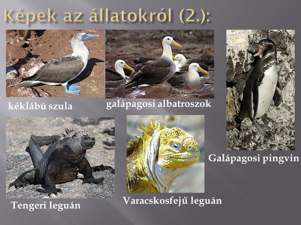 kéklábú szula galápagosi albatroszok Galápagosi pingvin Tengeri leguán Varacskosfejű leguán