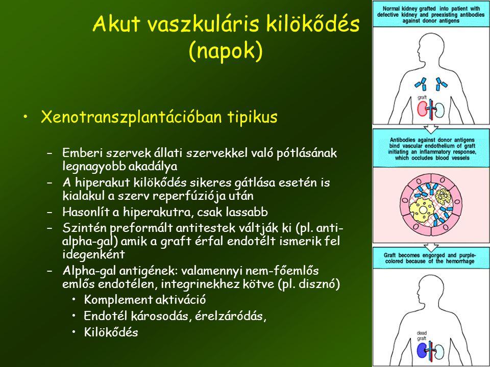 10 Akut vaszkuláris kilökődés (napok) •Xenotranszplantációban tipikus –Emberi szervek állati szervekkel való pótlásának legnagyobb akadálya –A hiperak