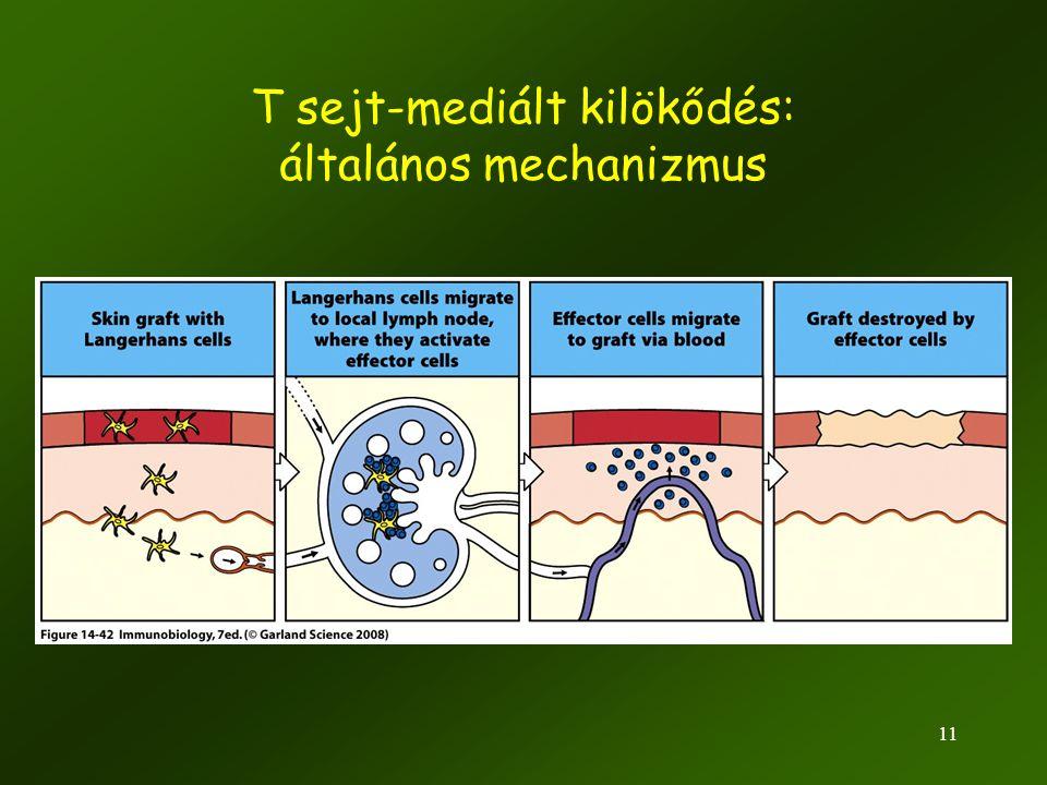 11 T sejt-mediált kilökődés: általános mechanizmus