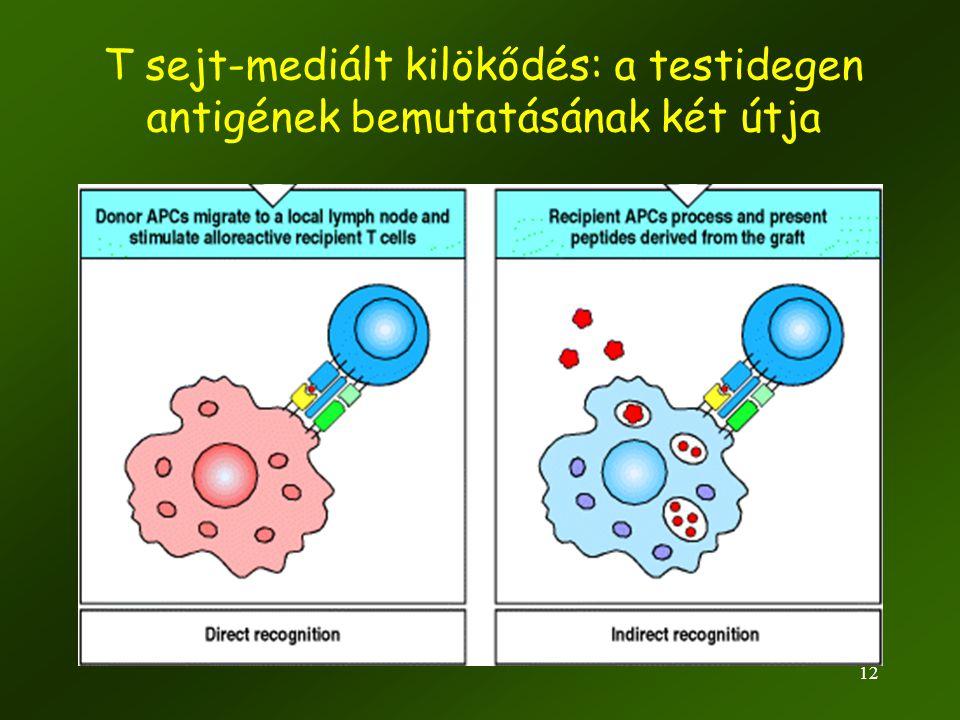 12 T sejt-mediált kilökődés: a testidegen antigének bemutatásának két útja