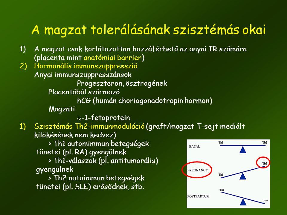 23 1)A magzat csak korlátozottan hozzáférhető az anyai IR számára (placenta mint anatómiai barrier) 2)Hormonális immunszuppresszió Anyai immunszuppres