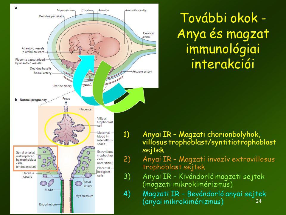 24 További okok - Anya és magzat immunológiai interakciói 1)Anyai IR – Magzati chorionbolyhok, villosus trophoblast/syntitiotrophoblast sejtek 2)Anyai