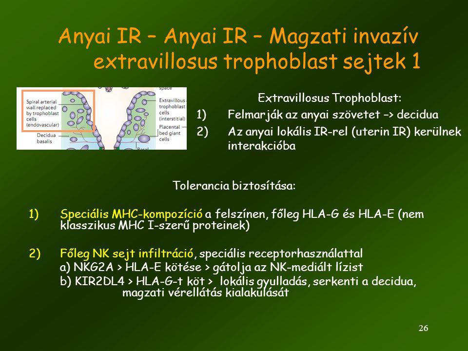 26 Anyai IR – Anyai IR – Magzati invazív extravillosus trophoblast sejtek 1 Extravillosus Trophoblast: 1)Felmarják az anyai szövetet –> decidua 2)Az a