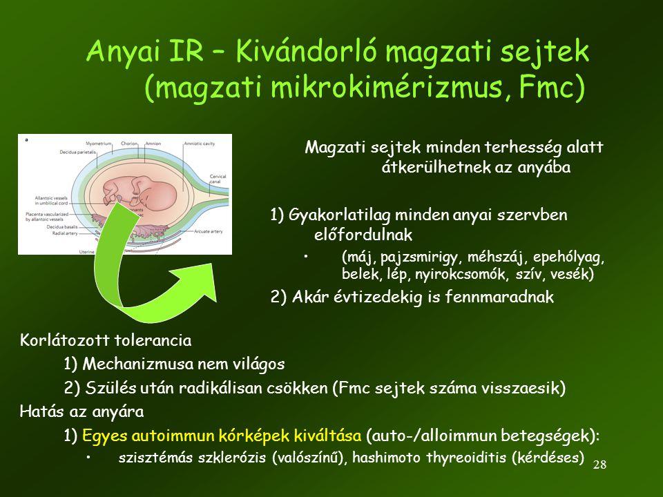 28 Anyai IR – Kivándorló magzati sejtek (magzati mikrokimérizmus, Fmc) Magzati sejtek minden terhesség alatt átkerülhetnek az anyába 1) Gyakorlatilag