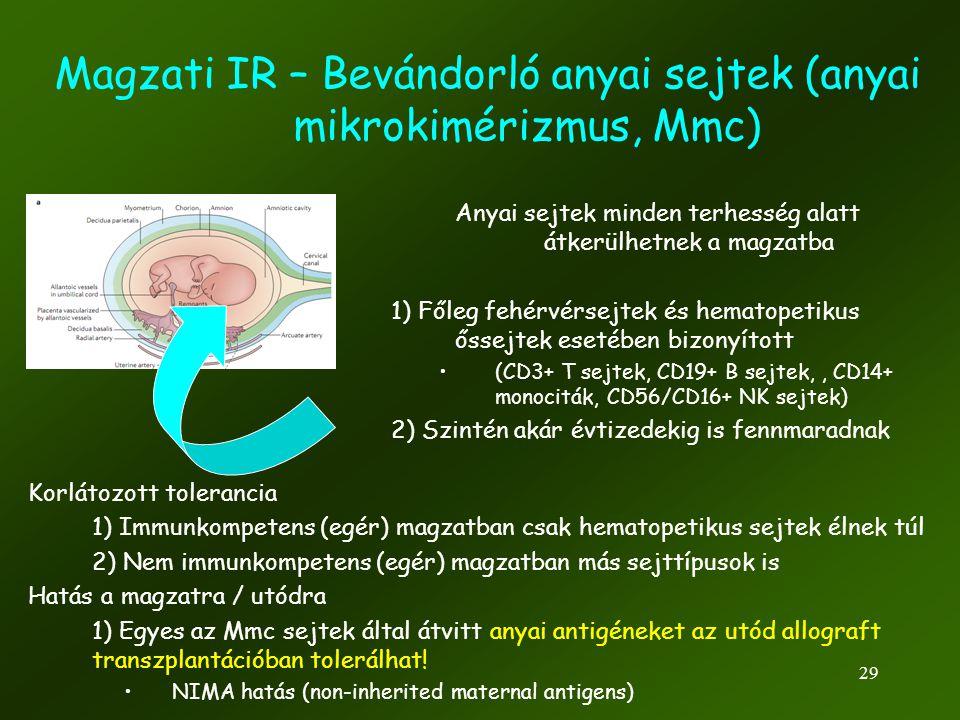 29 Magzati IR – Bevándorló anyai sejtek (anyai mikrokimérizmus, Mmc) Anyai sejtek minden terhesség alatt átkerülhetnek a magzatba 1) Főleg fehérvérsej