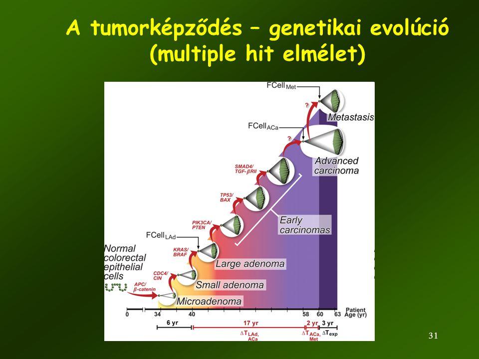 31 A tumorképződés – genetikai evolúció (multiple hit elmélet)