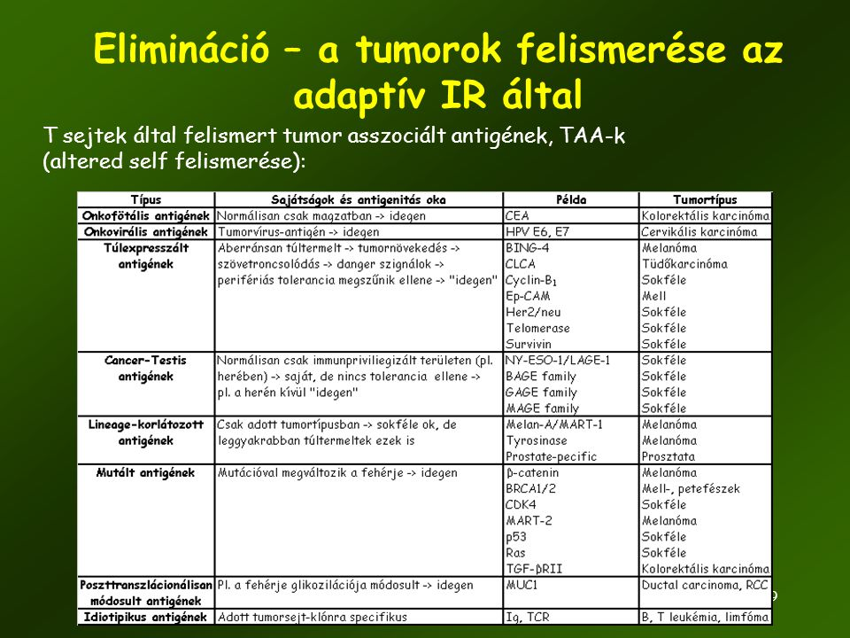 39 Elimináció – a tumorok felismerése az adaptív IR által T sejtek által felismert tumor asszociált antigének, TAA-k (altered self felismerése):
