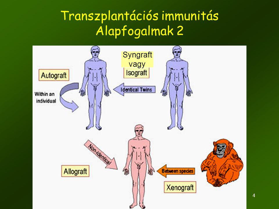 5 Transzplantációs antigének •Fő szövet-összeférhetetlenségi antigének •Major Histocompatibility Complex (HLA-géntermékek) •Rendkívül polimorfak, •Inkompatibilitás esélye nagy •Inkompatibilitás esetén akut kilökődés várható (napok) •Minor szövet-összeférhetetlenségi antigének (kevéssé polimorfak) •20-egynéhány ismert antigén (HA-1, -2, -3, HB-1, BCL2A1) elvben bármely polimorf gén fehérjeterméke •Sok nem-specifikus fehérje (pl.