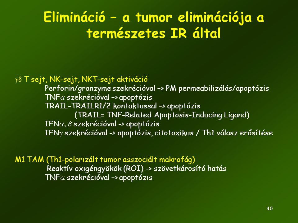 40 Elimináció – a tumor eliminációja a természetes IR által  T sejt, NK-sejt, NKT-sejt aktiváció Perforin/granzyme szekrécióval –> PM permeabilizálá