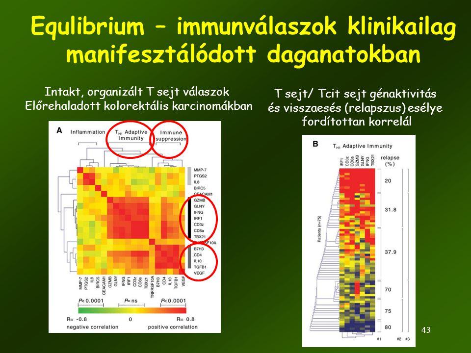 43 Equlibrium – immunválaszok klinikailag manifesztálódott daganatokban Intakt, organizált T sejt válaszok Előrehaladott kolorektális karcinomákban T