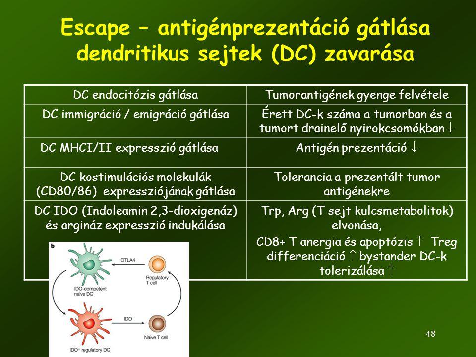 48 Escape – antigénprezentáció gátlása dendritikus sejtek (DC) zavarása DC endocitózis gátlásaTumorantigének gyenge felvétele DC immigráció / emigráci