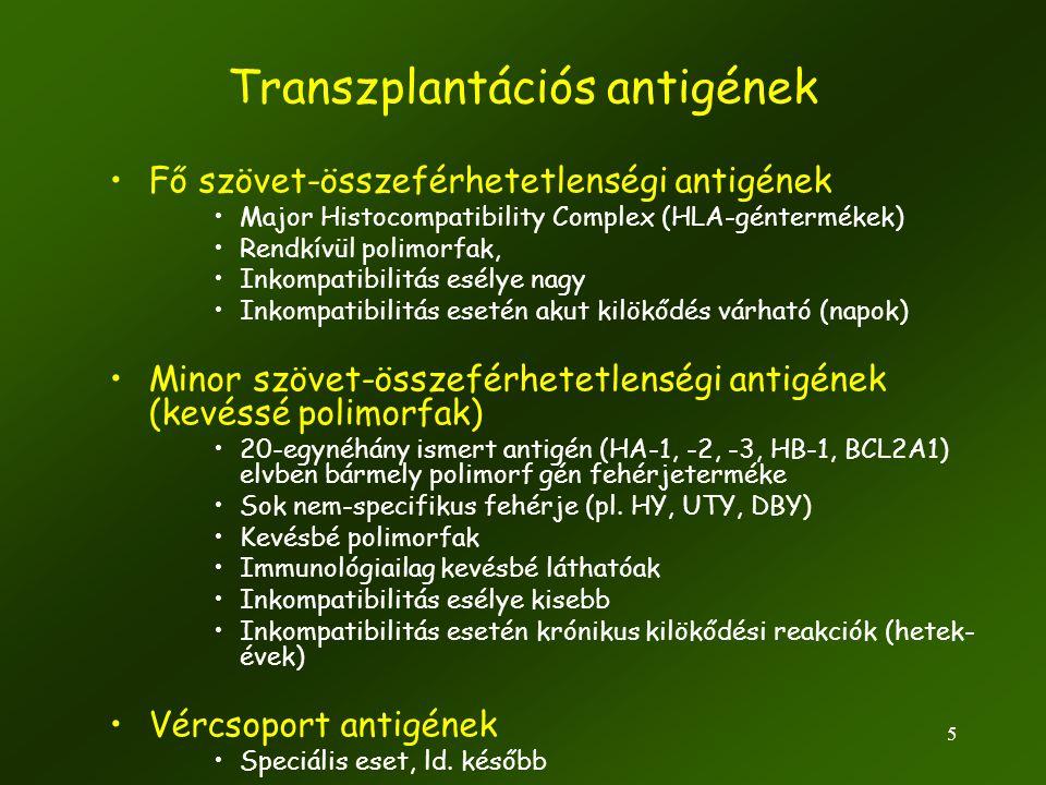 5 Transzplantációs antigének •Fő szövet-összeférhetetlenségi antigének •Major Histocompatibility Complex (HLA-géntermékek) •Rendkívül polimorfak, •Ink