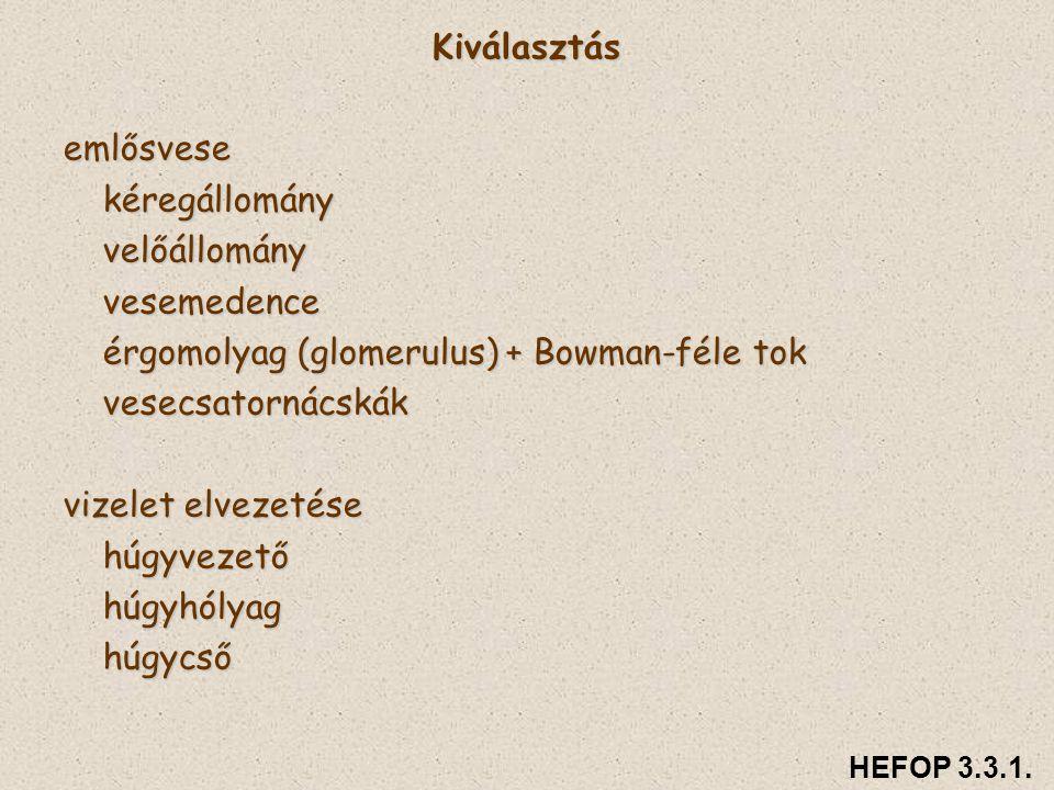 Kiválasztásemlősvesekéregállományvelőállományvesemedence érgomolyag (glomerulus) + Bowman-féle tok vesecsatornácskák vizelet elvezetése húgyvezetőhúgy